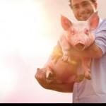 NEDAP Automatikus, egyedi etetés fialó kocáknak